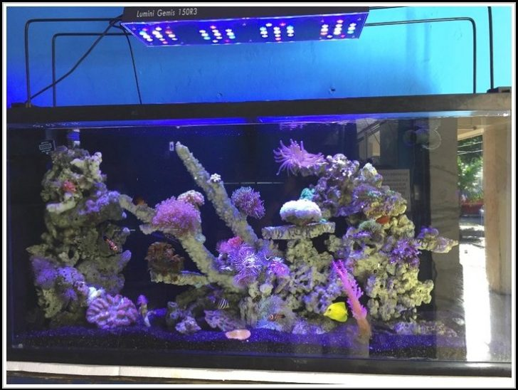 Permalink to Aquarium Led Beleuchtung Selber Bauen Meerwasser