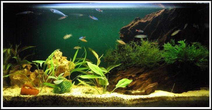 Permalink to Aquarium Mit Led Beleuchtung Kaufen