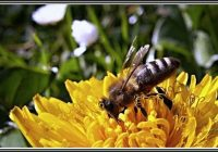 Bienen Im Garten Ansiedeln