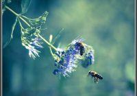 Bienen Im Garten Halten
