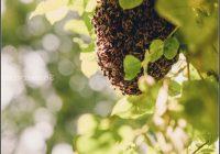 Bienen Im Garten Was Tun