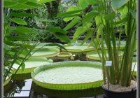 Botanischer Garten Dresden Eintritt