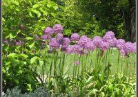 Botanischer Garten Linz Orchideen