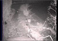 Fuchs Im Garten Katze