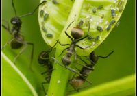Hausmittel Gegen Ameisen Garten