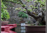 Kleiner Garten Nach Feng Shui