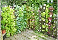 Kruter Pflanzen Balkon