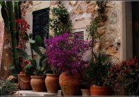 Mediterrane Pflanzen Fr Balkon