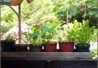 Pflanzen Auf Dem Balkon Als Sichtschutz
