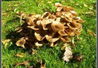 Pilze Im Garten Essbar