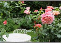 Rosen Im Garten Pflege