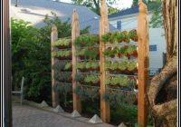 Rosmarin Im Garten Pflanzen