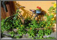 Rund Um Haus Und Garten Rust