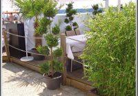 Sichtschutz Balkon Mit Pflanzen