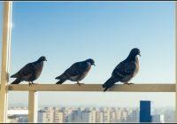 Tauben Auf Balkon Vertreiben