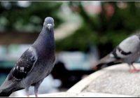 Tauben Vom Balkon Vertreiben