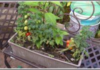 Tomaten Anbauen Auf Balkon