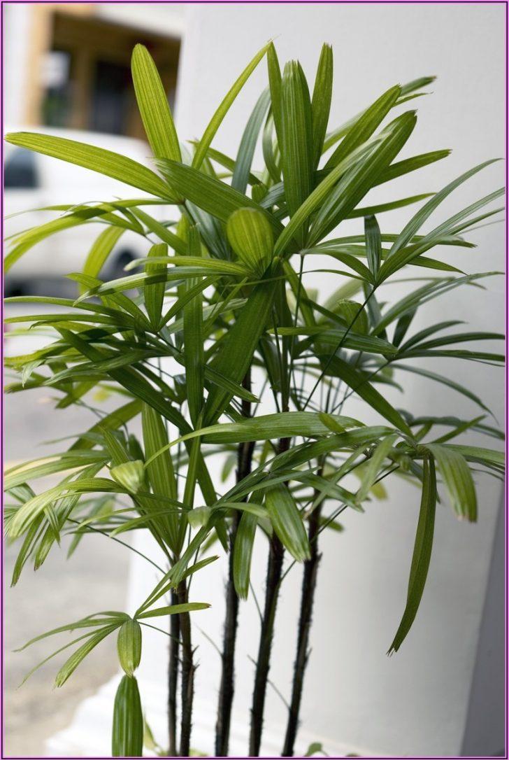 Permalink to Ungiftige Zimmerpflanzen Für Kinder