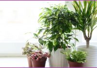 Ungiftige Zimmerpflanzen Für Kinderzimmer