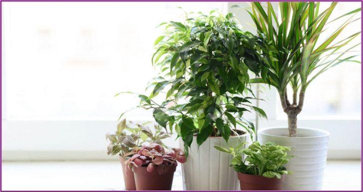 Permalink to Ungiftige Zimmerpflanzen Für Kinderzimmer