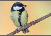 Vogel Im Garten Bewegt Sich Nicht