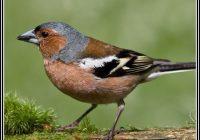 Vogel Im Garten Fliegt Nicht
