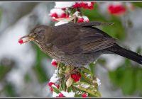 Vogelschutz Im Gartenbau