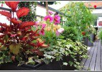 Wann Erdbeeren Auf Dem Balkon Pflanzen