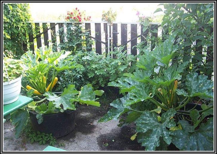 Permalink to Zucchini Standort Im Garten